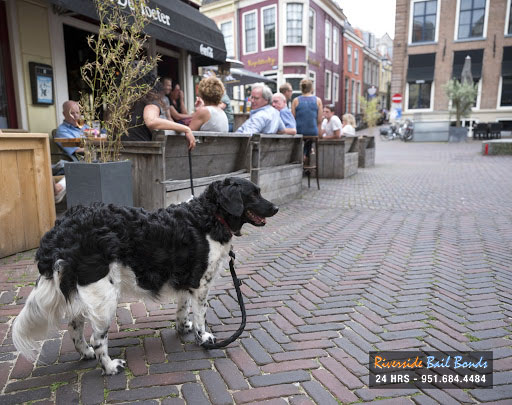 Denying a Dog Entrance to Your Establishment? Think Again
