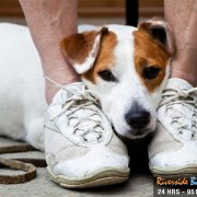 Animal Abuse Now Illegal at the Federal Level