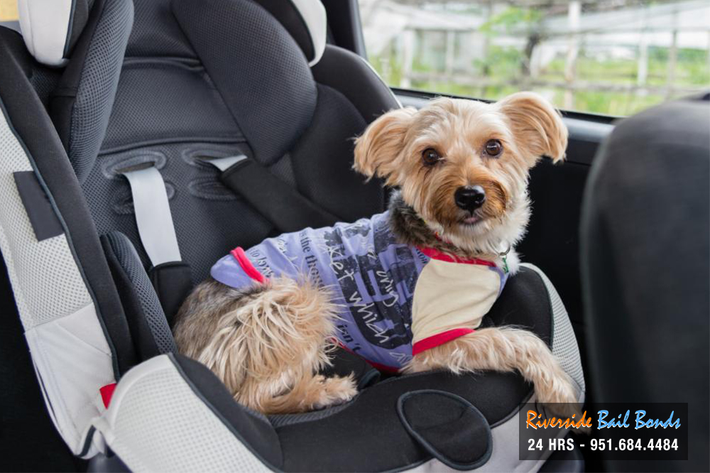 Don't Leave Your Pet Behind in the Car